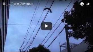 ホットバード鷹動画